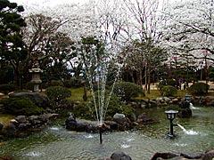 小丸山公園(七尾市)の桜の画像