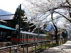 古宮公園(白山市)の桜の画像