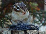 リスの森 飛騨山野草自然庭園 飛騨高山観光Web