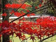 紅葉の憩いの森の画像