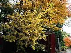 卯辰山山麓寺院群の紅葉 :金沢観光情報 【 きまっし金沢 】