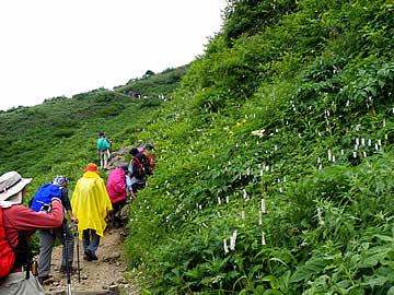 白山の登山道と花畑