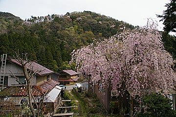higasidani4