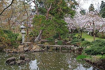輪島の一本松公園の桜