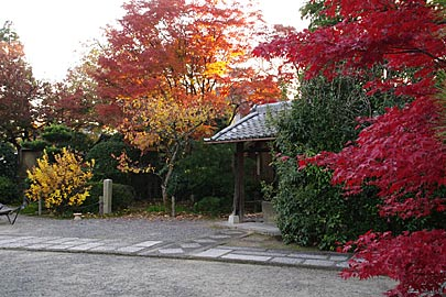 神光院の紅葉