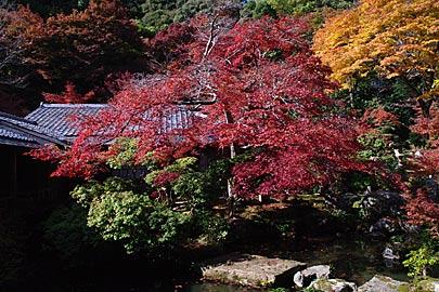 岩倉実相院の紅葉