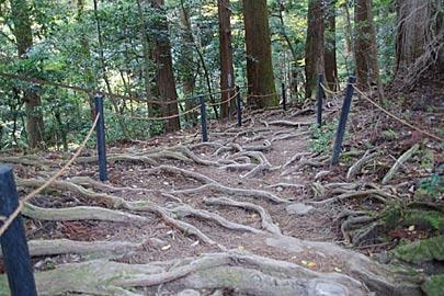 鞍馬山の木の根道