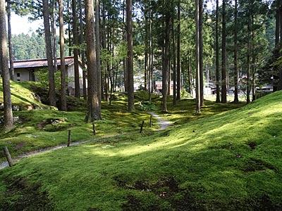 苔の園の風景