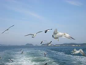 松島島巡り観光船 仁王丸に来たカモメ
