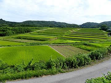 大笹波棚田