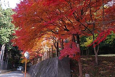 ヒムロ山園の紅葉