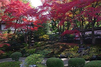 泉涌寺の庭園