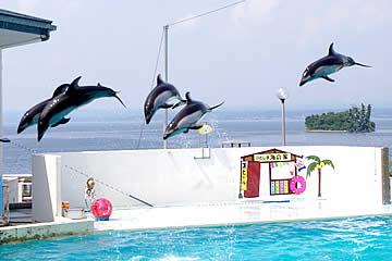 のとじま水族館のイルカ