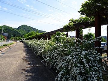 yosiokaenti1